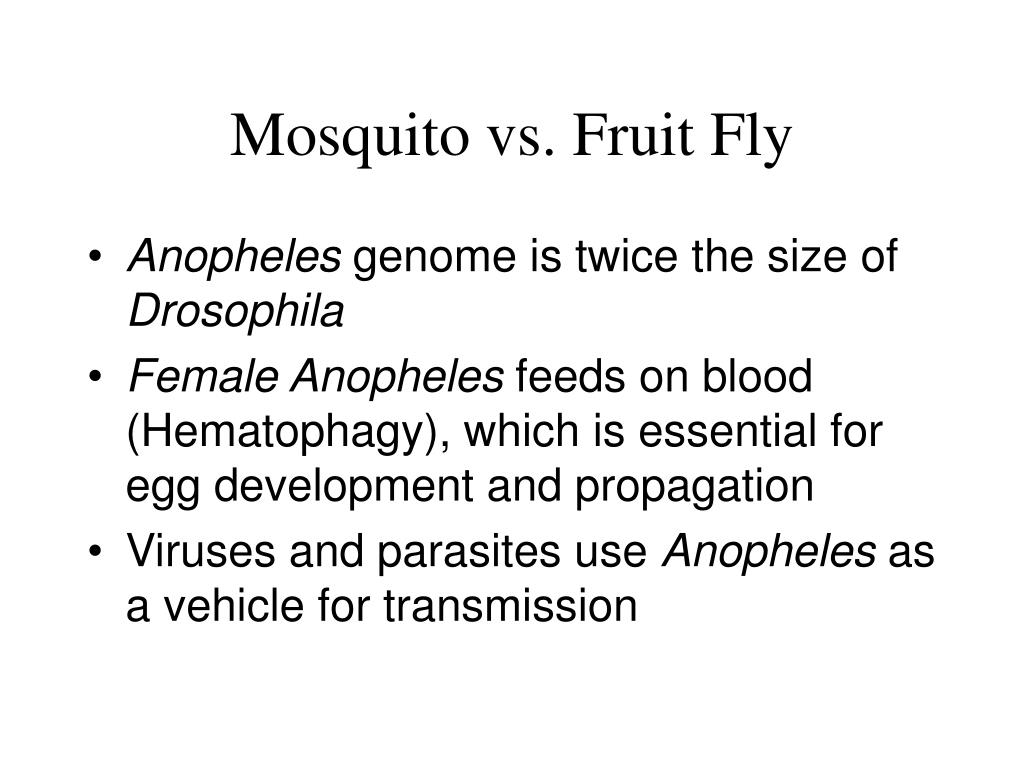 Mosquito vs. Fruit Fly