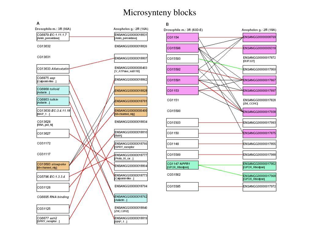 Microsynteny blocks
