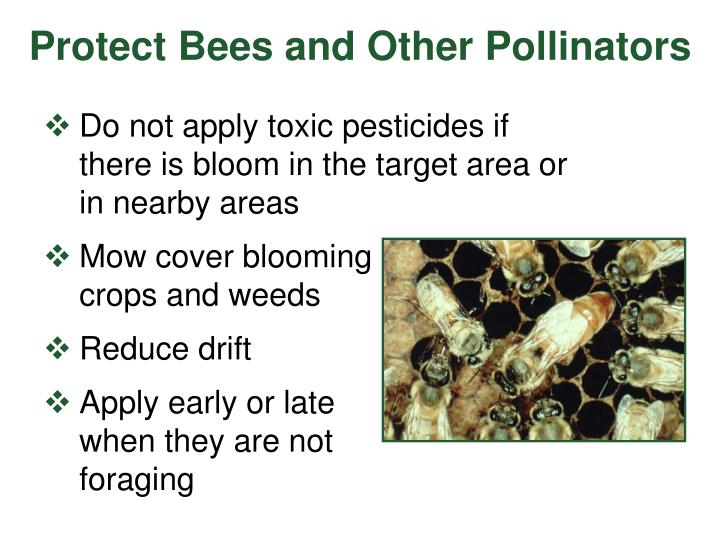Protect Bees and Other Pollinators