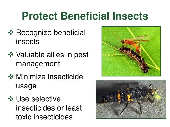 Protect Beneficial Insects