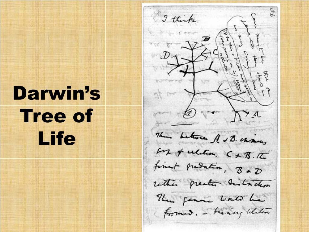 Darwin's Tree of Life