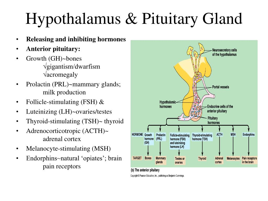 hypothalamic hormones Hypothalamic disorders cause from controlling the temperature of the body to producing thyroid hormones, the hypothalamus certainly plays a very important role.