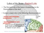lobes of the brain parietal lobe