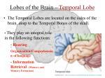 lobes of the brain temporal lobe