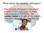 what about the medulla oblongata