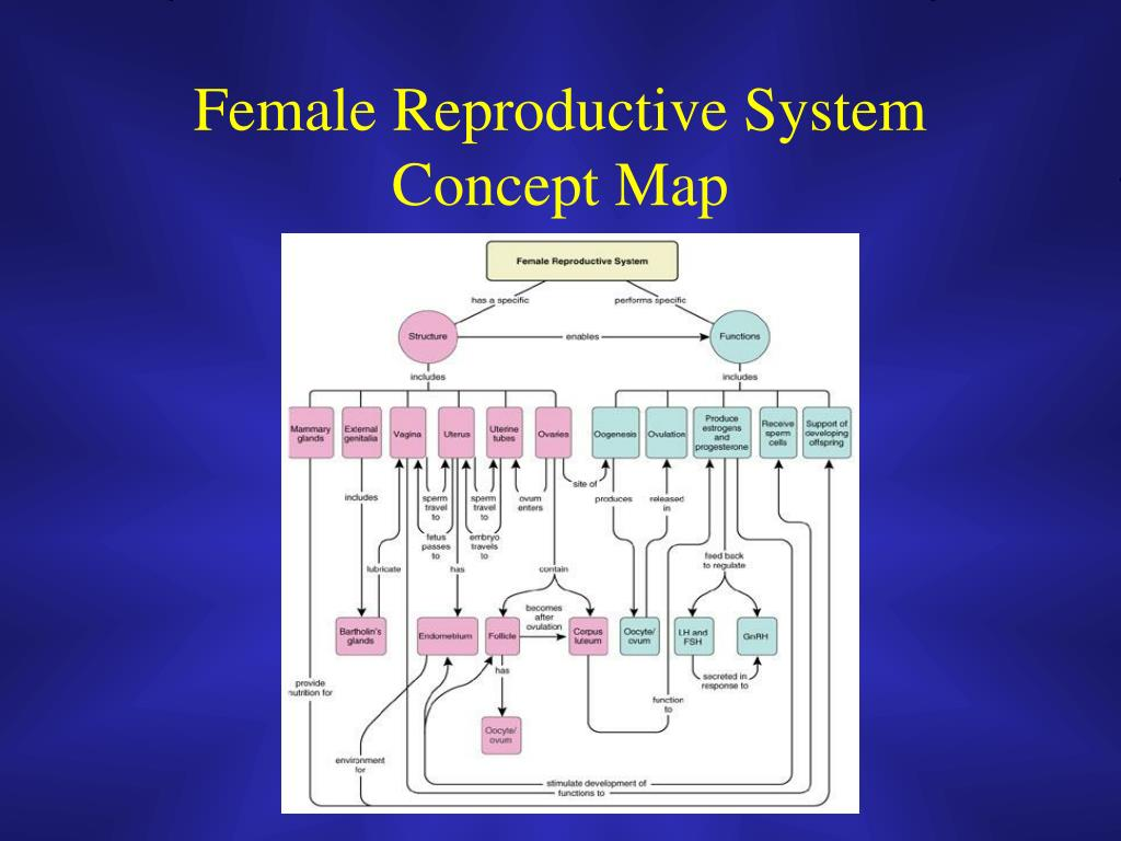 Female Reproductive System Concept Map