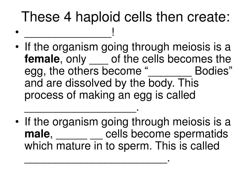 These 4 haploid cells then create: