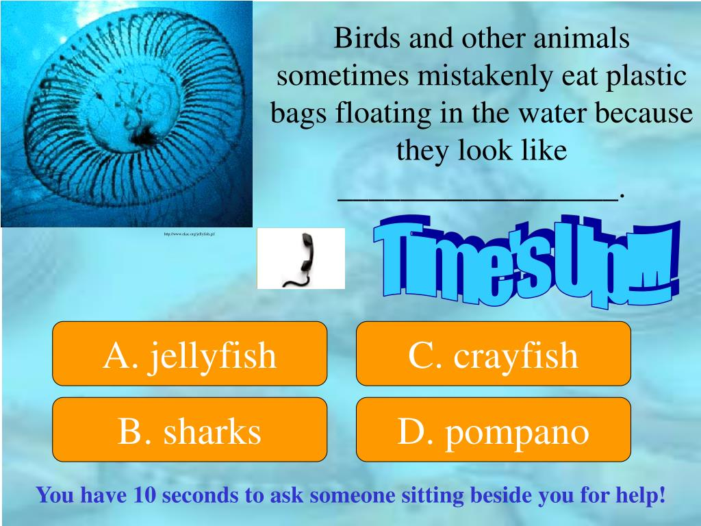 Birds and other animals sometimes mistakenly eat plastic bags floating in the water because they look like __________________.
