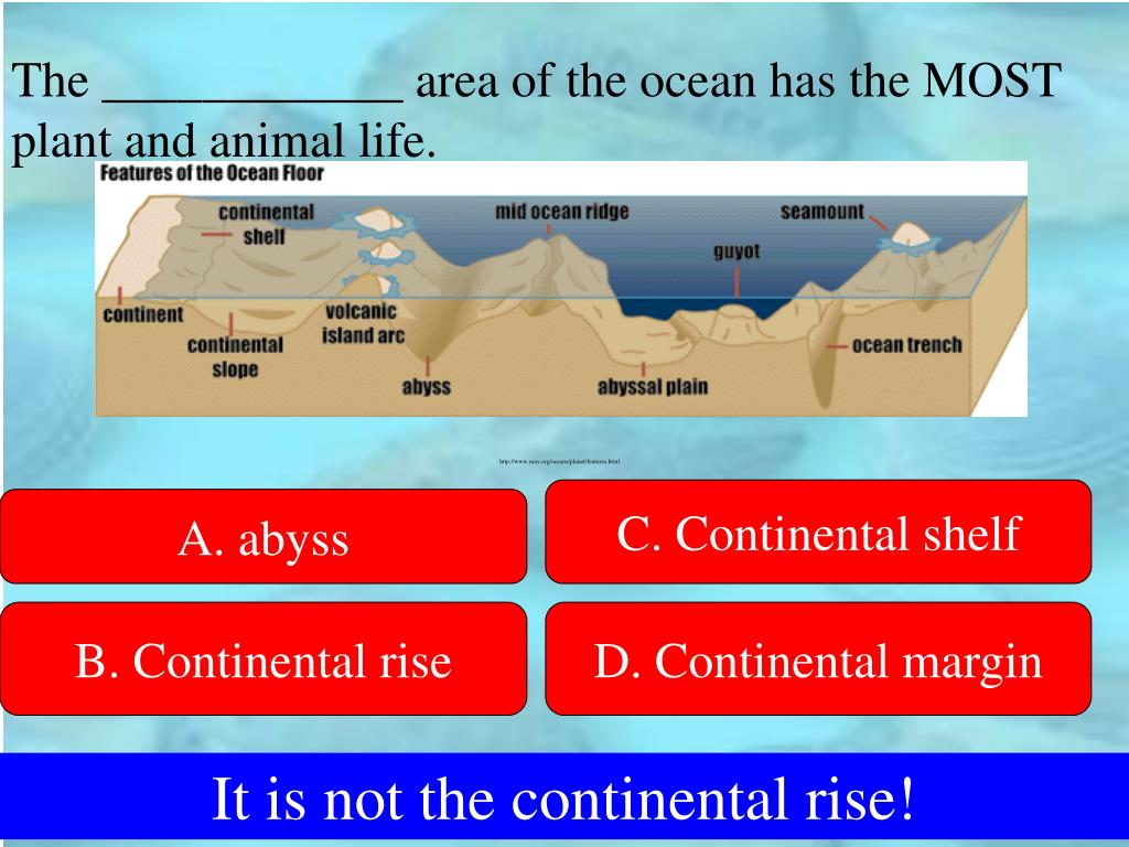 The ____________ area of the ocean has the MOST plant and animal life.