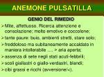 anemone pulsatilla24