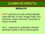 clematis erecta29