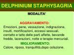 delphinium staphysagria20