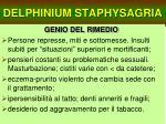 delphinium staphysagria21