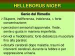 helleborus niger15