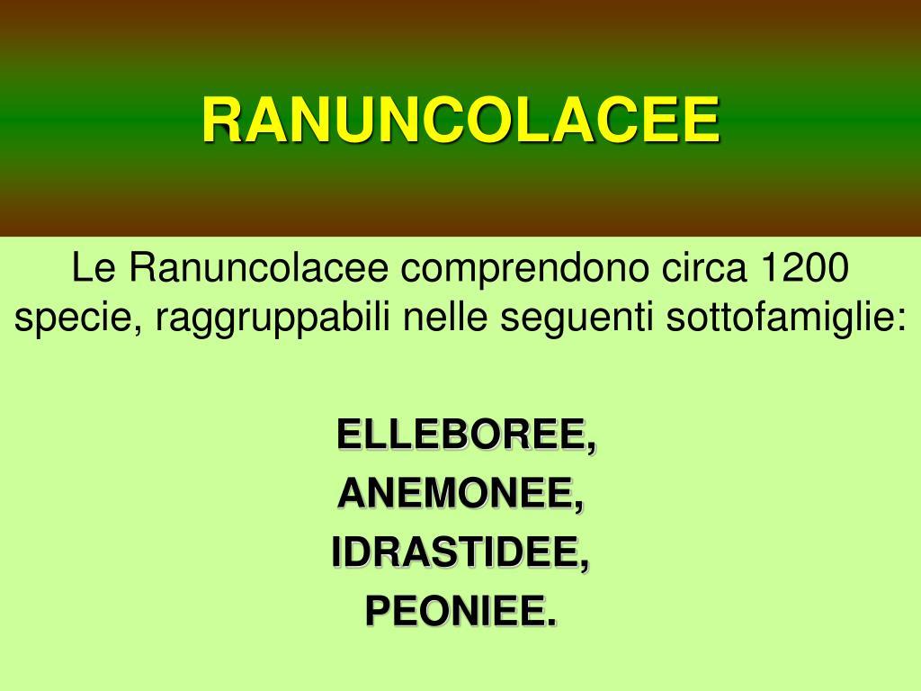 ranuncolacee