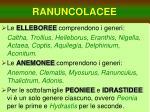 ranuncolacee2