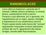 ranuncolacee4