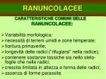 ranuncolacee5