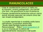 ranuncolacee6
