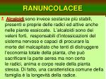ranuncolacee8