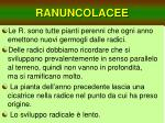 ranuncolacee9