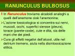 ranunculus bulbosus