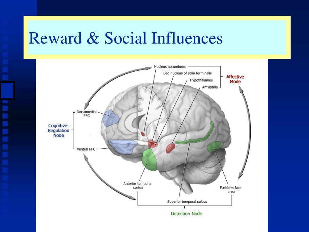 Reward & Social Influences