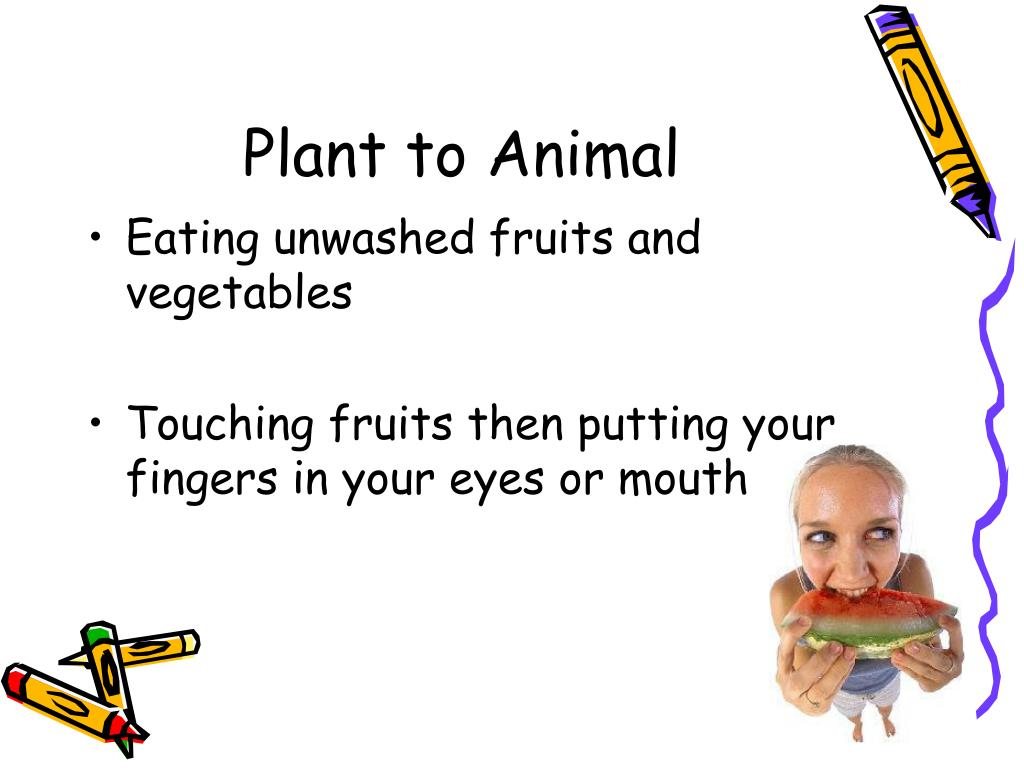 Plant to Animal