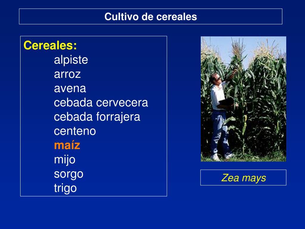 Cultivo de cereales