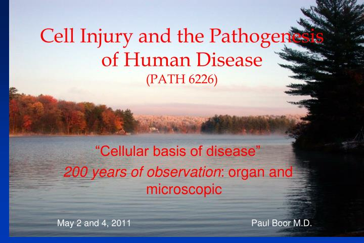Cell Injury and the Pathogenesis of Human Disease