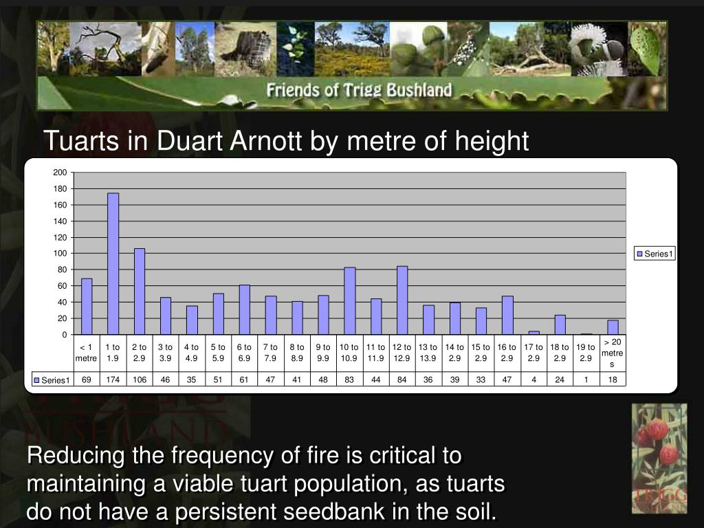 Tuarts in Duart Arnott by metre of height