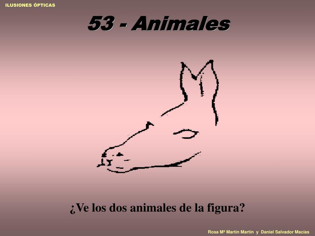 53 - Animales
