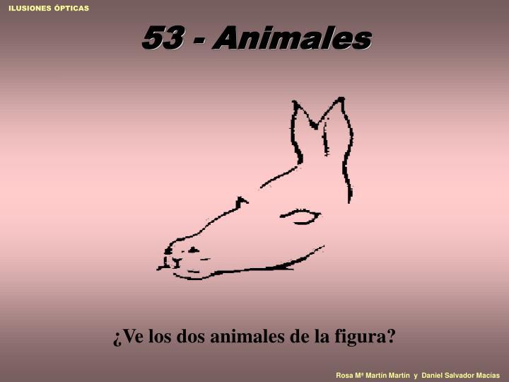 53 animales