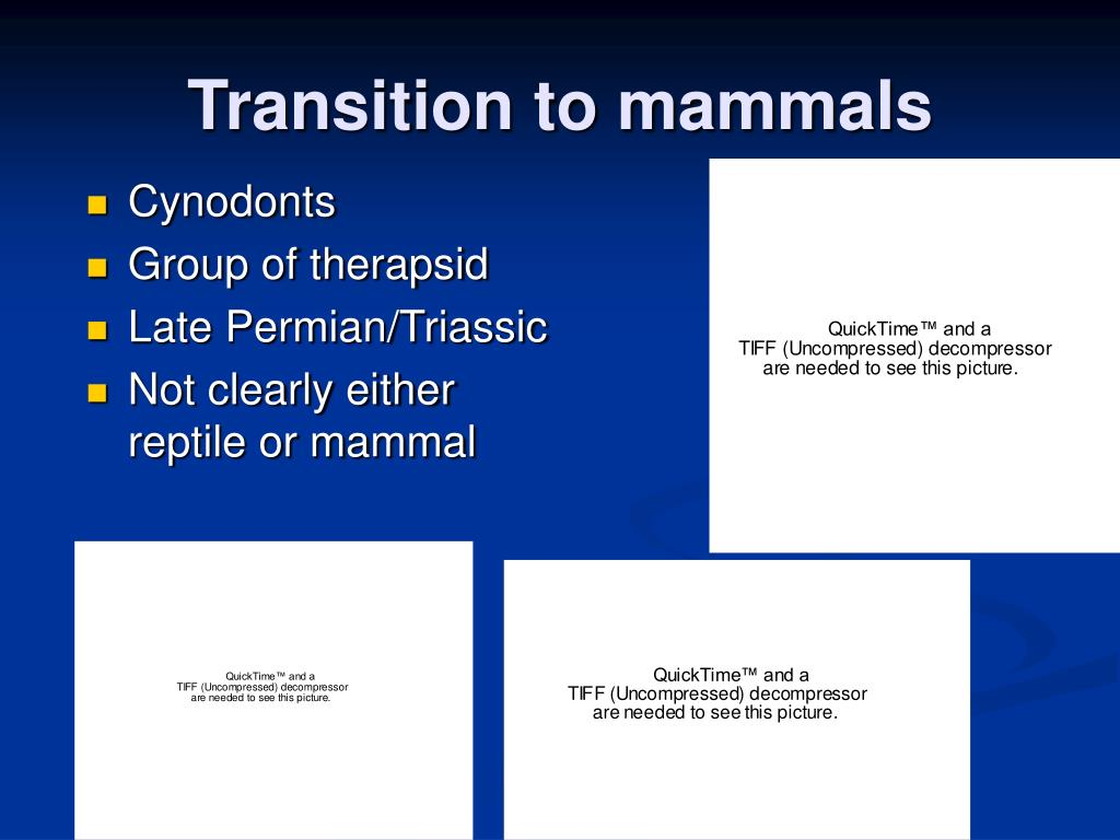 Transition to mammals