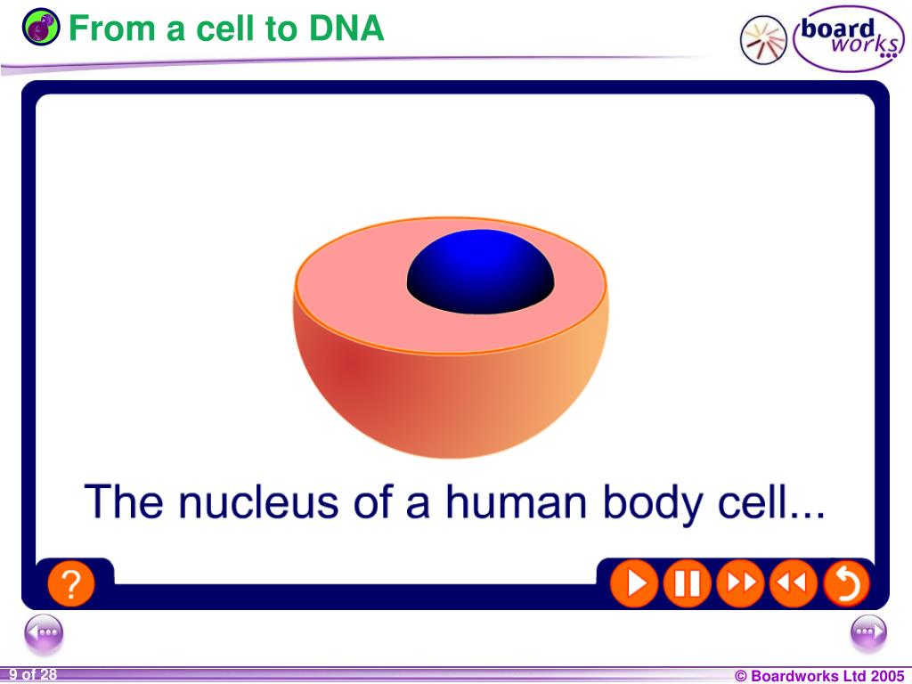 From a cell to DNA