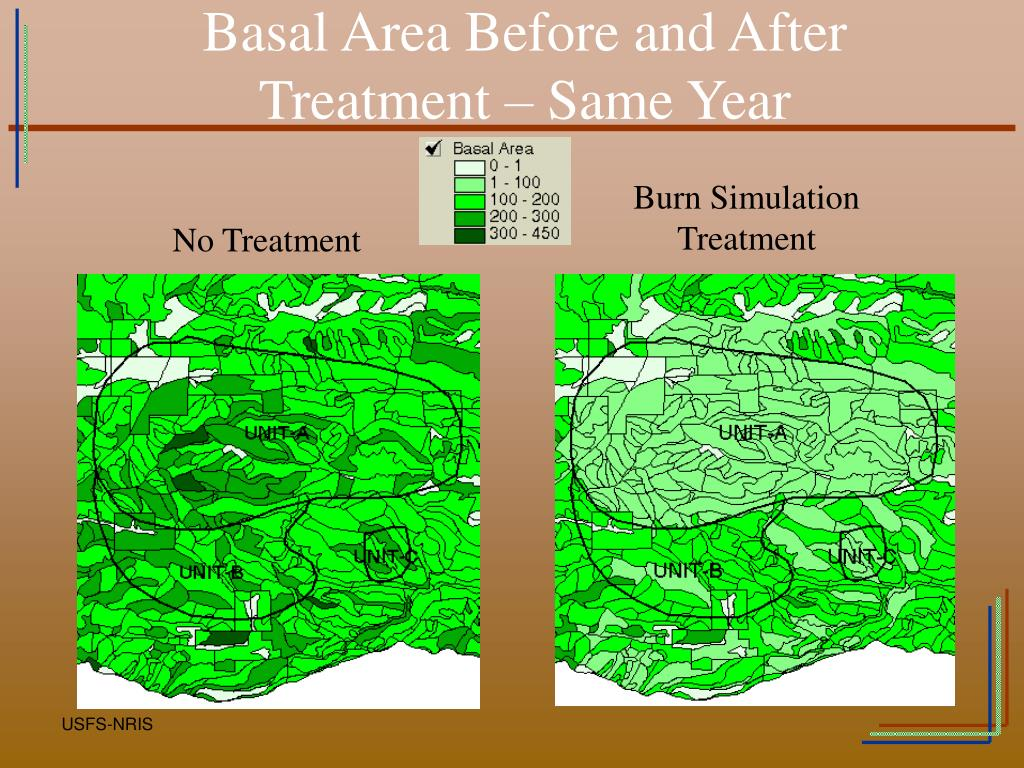 Basal Area Before and After
