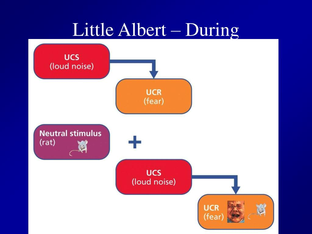 Little Albert – During Conditioning
