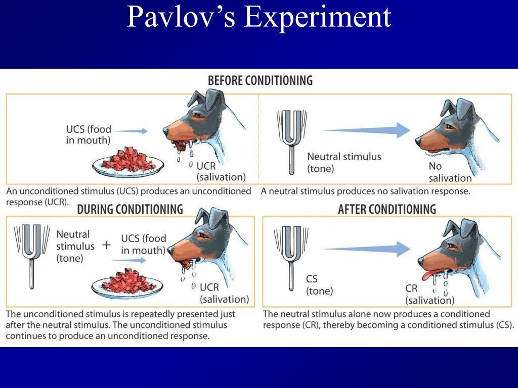 Pavlov's Experiment