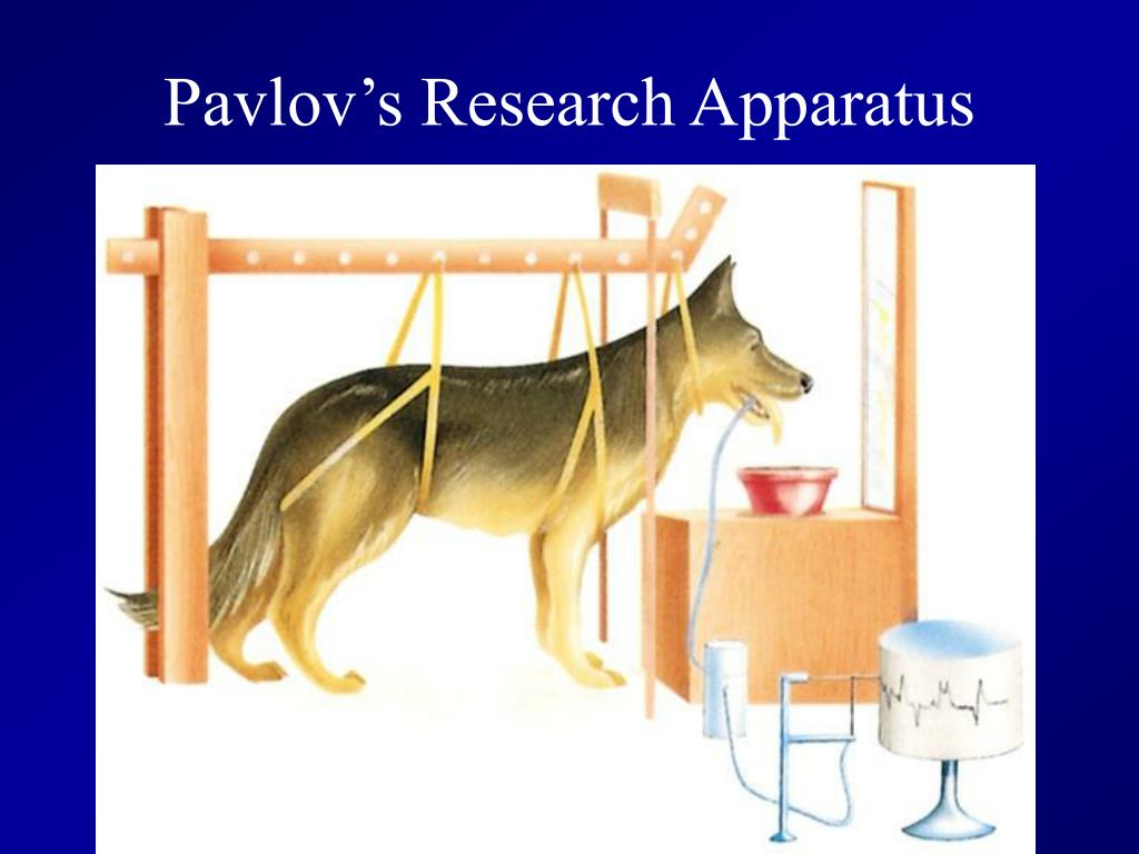 Pavlov's Research Apparatus