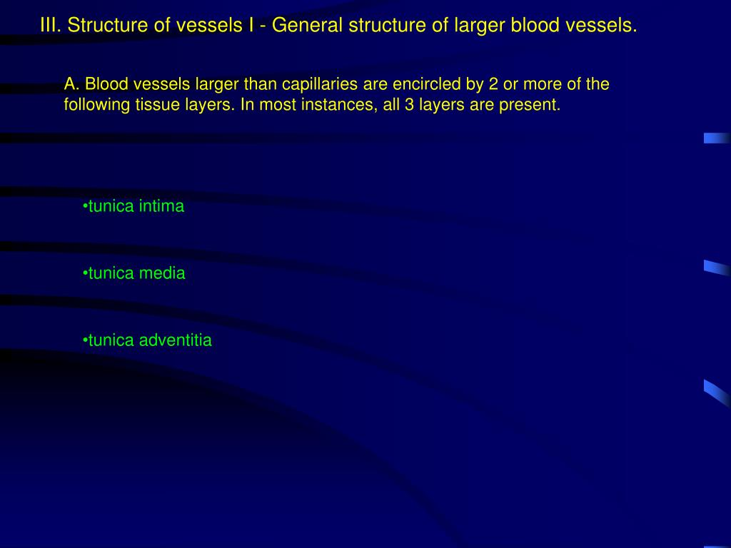 III. Structure of vessels I - General structure of larger blood vessels.