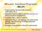 re search a ttachment p rogramme reap