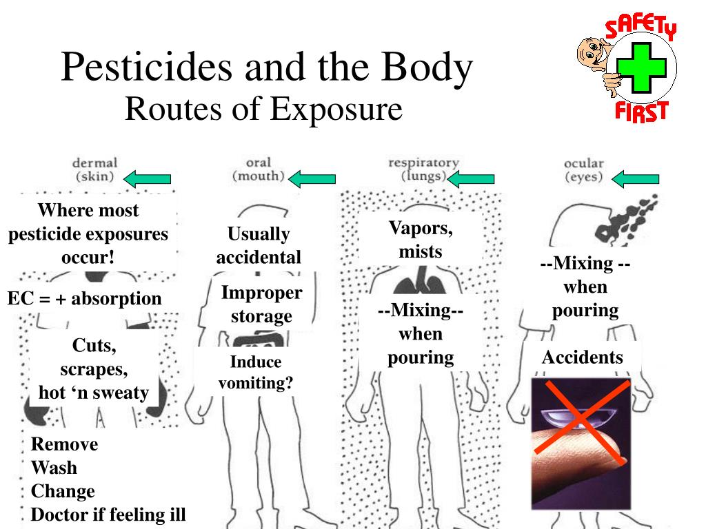 Pesticides and the Body