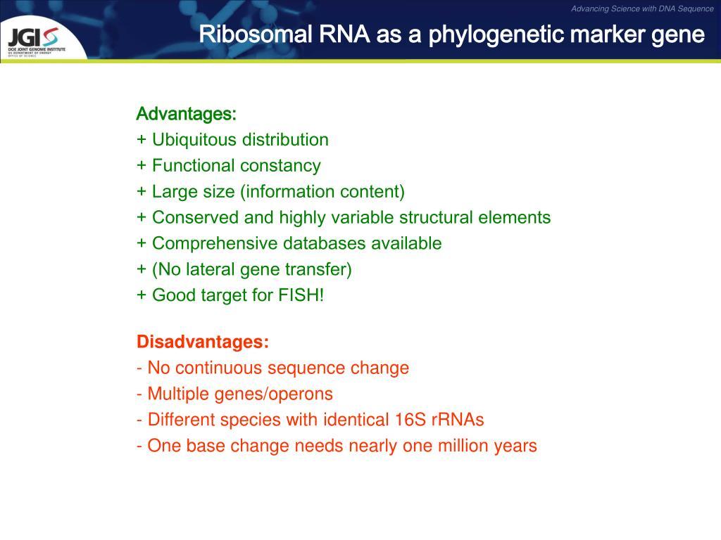Ribosomal RNA as a phylogenetic marker gene