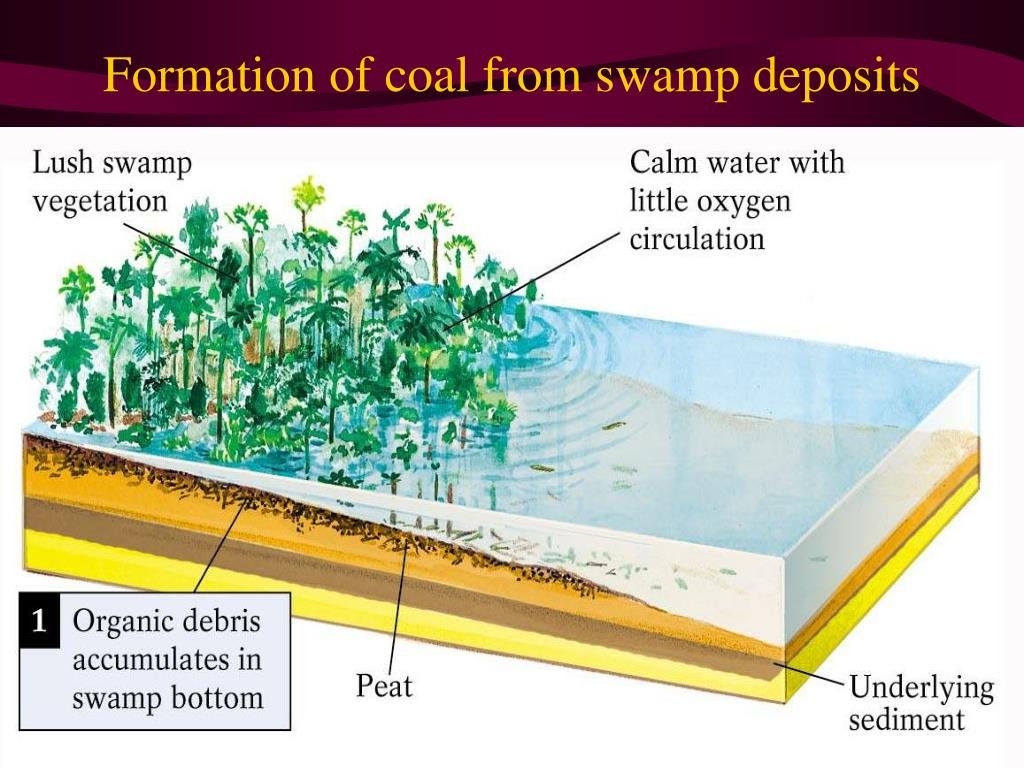 Formation of coal from swamp deposits