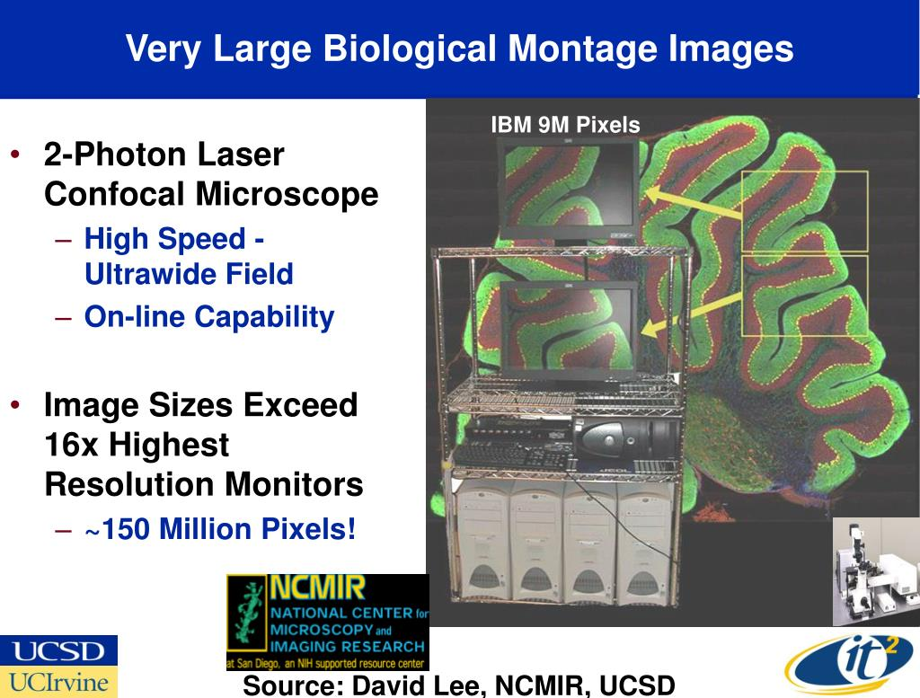 Very Large Biological Montage Images