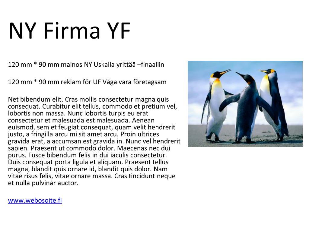 NY Firma YF