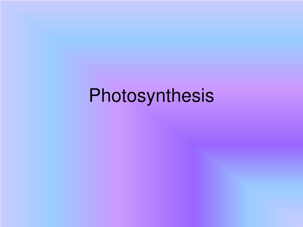photosynthesis l.