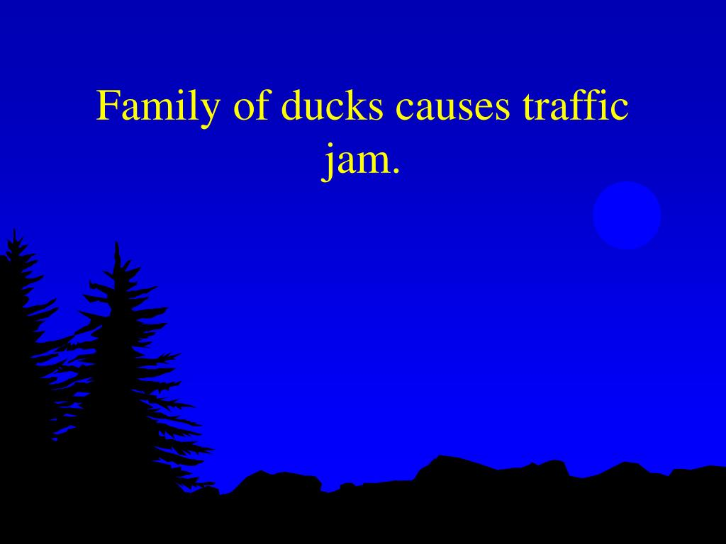 Family of ducks causes traffic jam.
