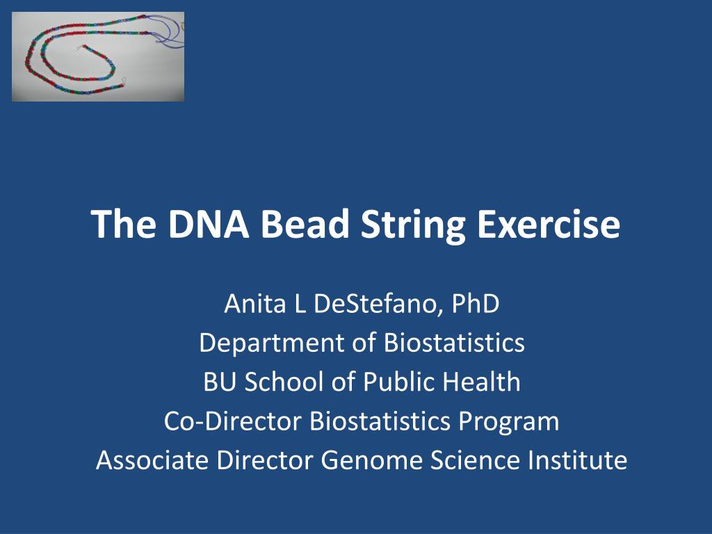 the dna bead string exercise