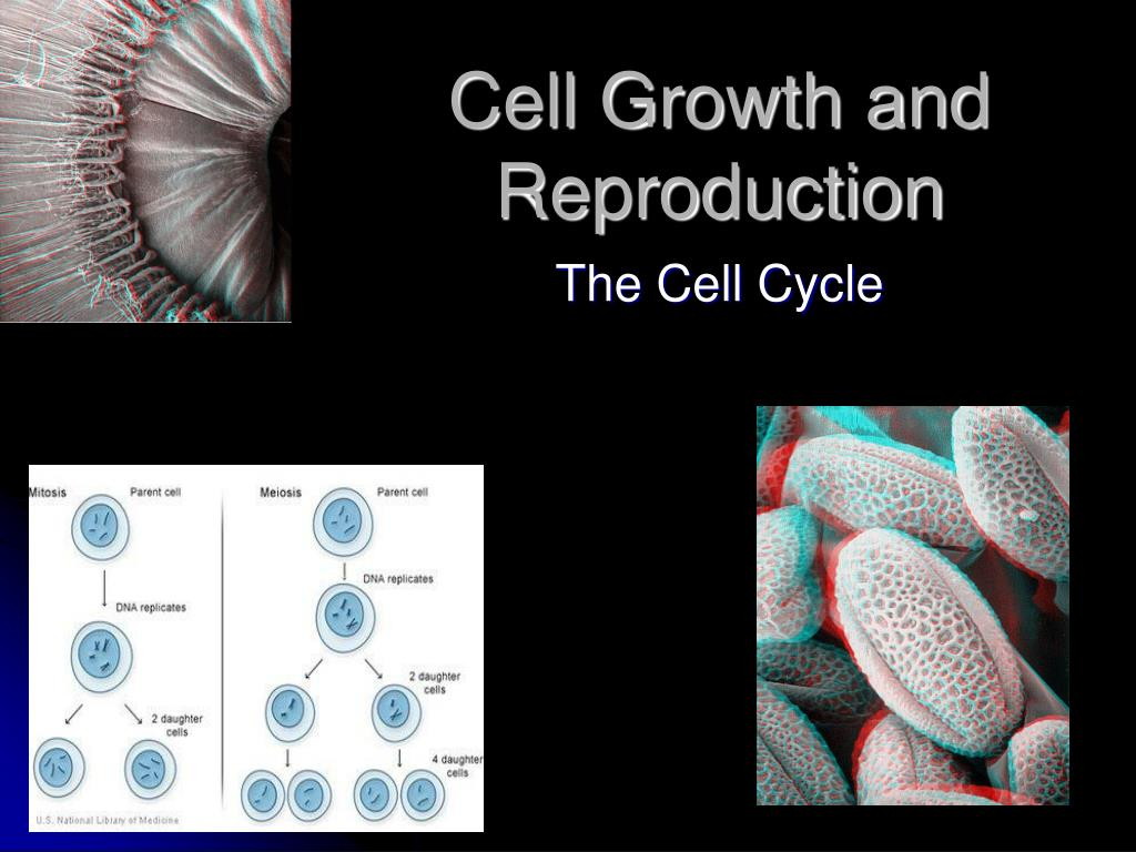 cell growth and reproduction l.